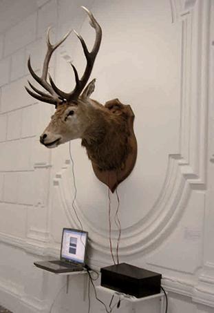 Trophée, tête de cerf, yeux de verre, servomoteurs, module de commande des servomoteurs, bloc alimentation PC, interface midi/usb, Webcam, ordinateur, 2007